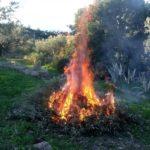 Autorisation temporaire de la pratique de brûlage de végétaux