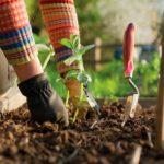 Formation jardinage & compostage